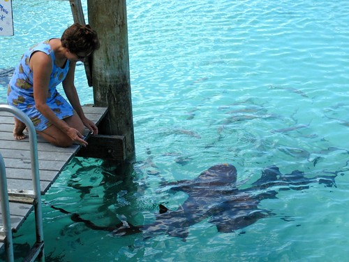 Feeding leftovers to the sharks