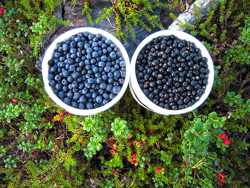 Blueberries and crowberries