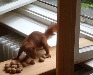 Eichhörnchen mag keine Grissinikekse 2