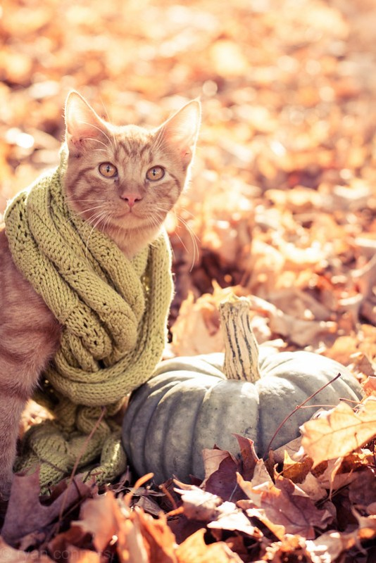 Apple in a scarf