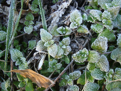 Gijang 0°C Bodenfrost by Jens-Olaf