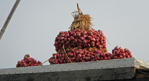 Purple Shallots for Sale at the Mekong River Floating Market