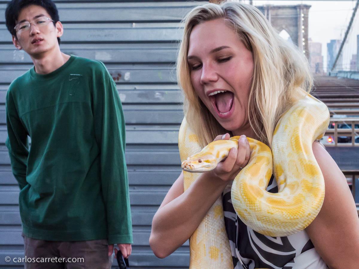 Serpientes en el puente de Brooklyn