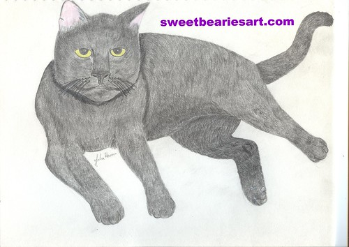 Cat Drawing by Julia Hanna