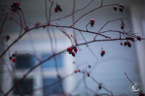 13 декабря 2013, Паломническая поездка делегации СПбПДА к святыням Финляндии. День 1-й.