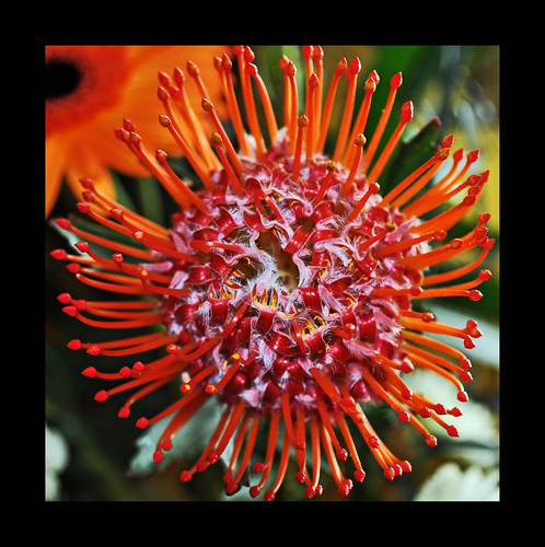 Burnt Orange Bloom