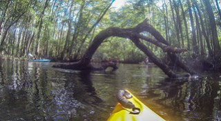 South Edisto River-033