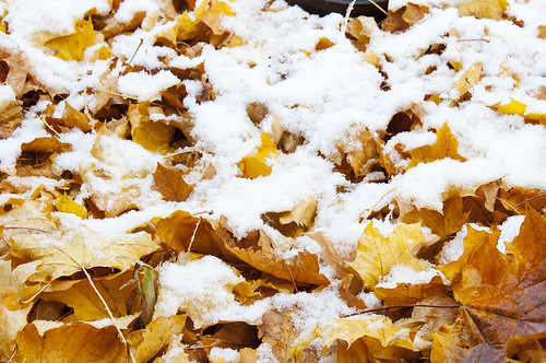 First Snow 6