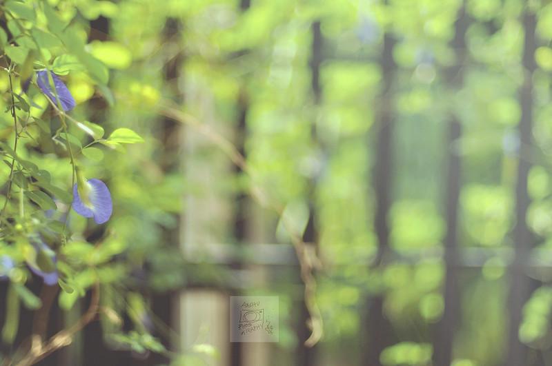 Day 140.365 - Blue Flower Bokeh