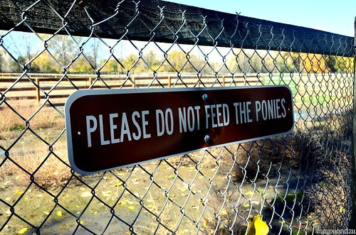 Please Don't Feed The Ponies