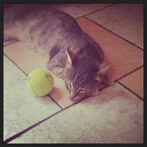 Siamo stati adottati da un gatto #agesci #vdb #scout #lupetti #fo10
