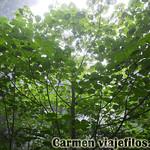 07 Viajefilos en Australia. Dorrigo Rainforest NP 07