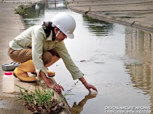 Freshwater Biomonitoring