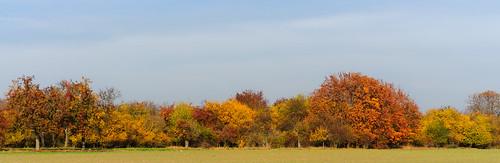 Herbstfarben by OK's Pics