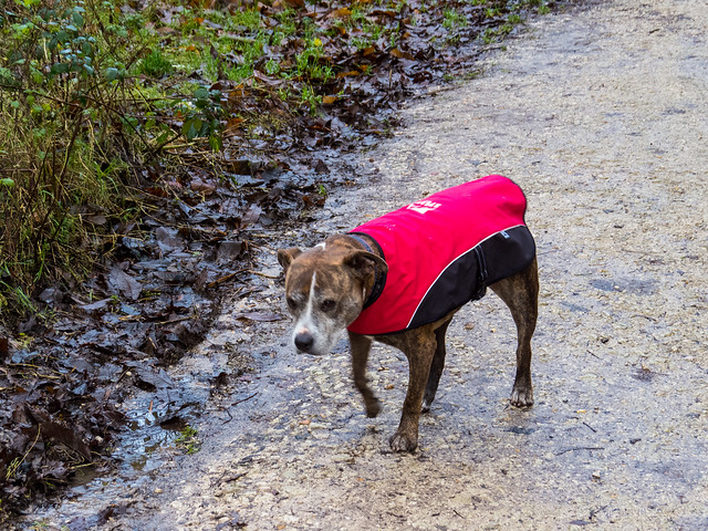Jez has got her coat on today - much to her disgust