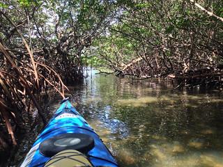 Hidden Mangrove Passage