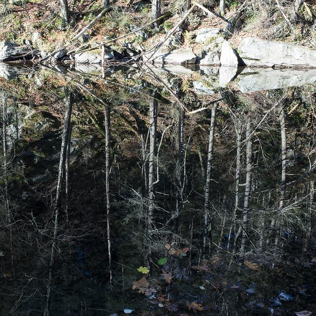 Reflection on the Shepaug River