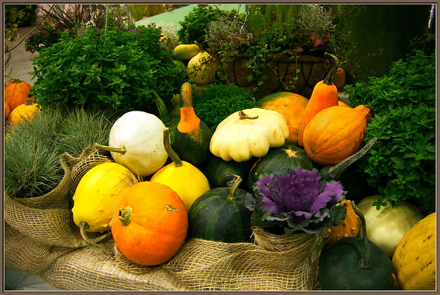 Thanksgiving_wb32_0060