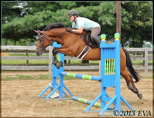 "Raised the jump cups to about 2'9"" this morning, and Wizard was a star."