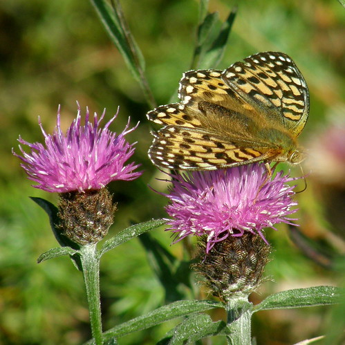 Avid nectar feeder II