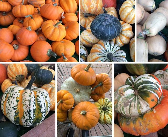 Pumpkin montage 2