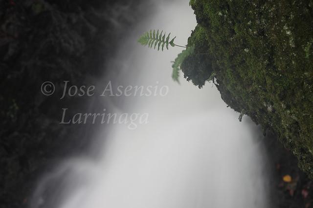 Parque Natural de Gorbeia #DePaseoConLarri #Photography 1401