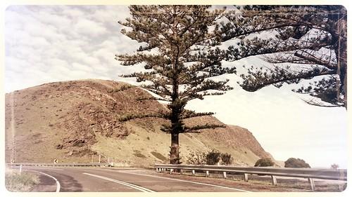 Between Road and Shore