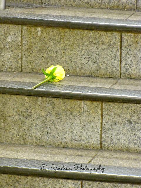 Abandoned Rose (2)