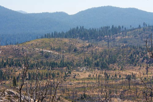 Just inside Yosemite, we see recovering fire damage