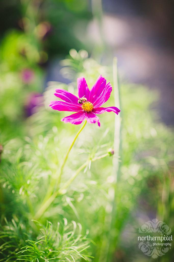 Farm Flower