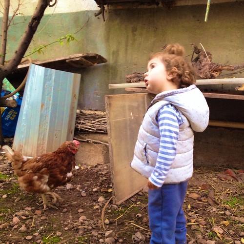 El ladrón de gallinas