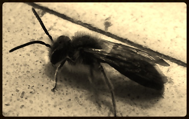 flying insect