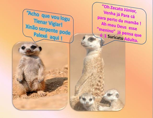 a mamae suricata
