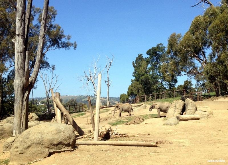 Oakland Zoo (32)