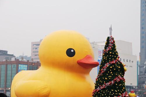 小鴨親聖誕樹