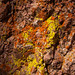 Colorful Lichen at Pinnacles National Park