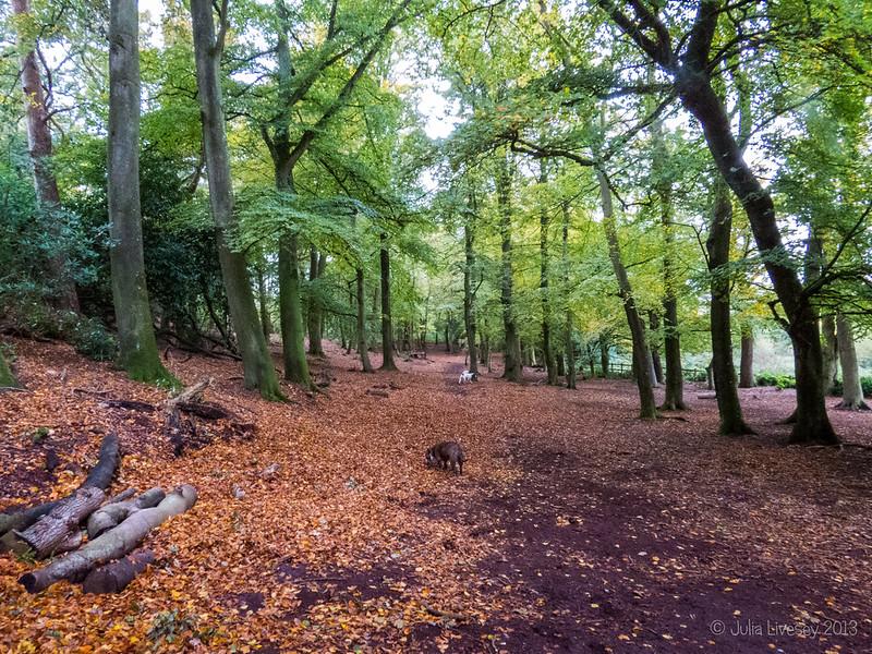 Autumn in the Woodland Walk