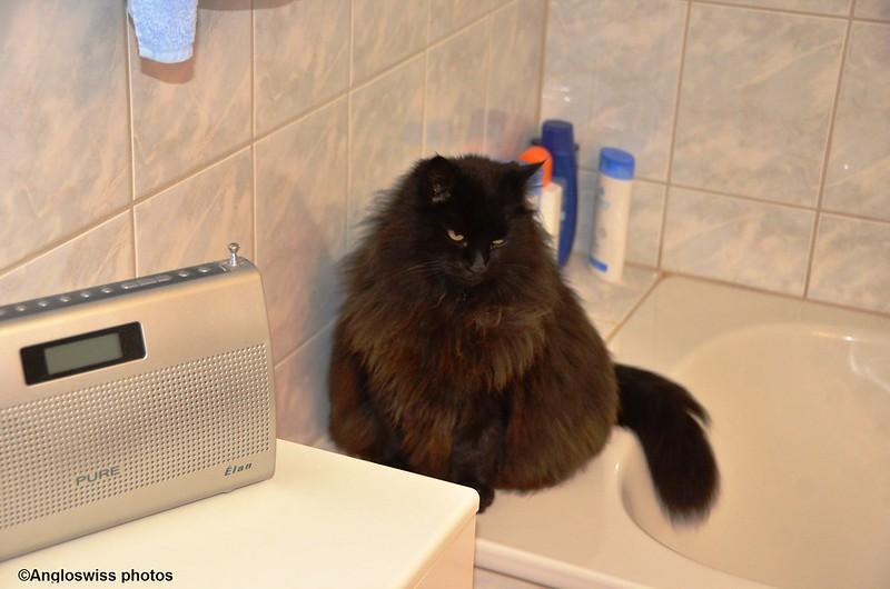Nera in the bathroom