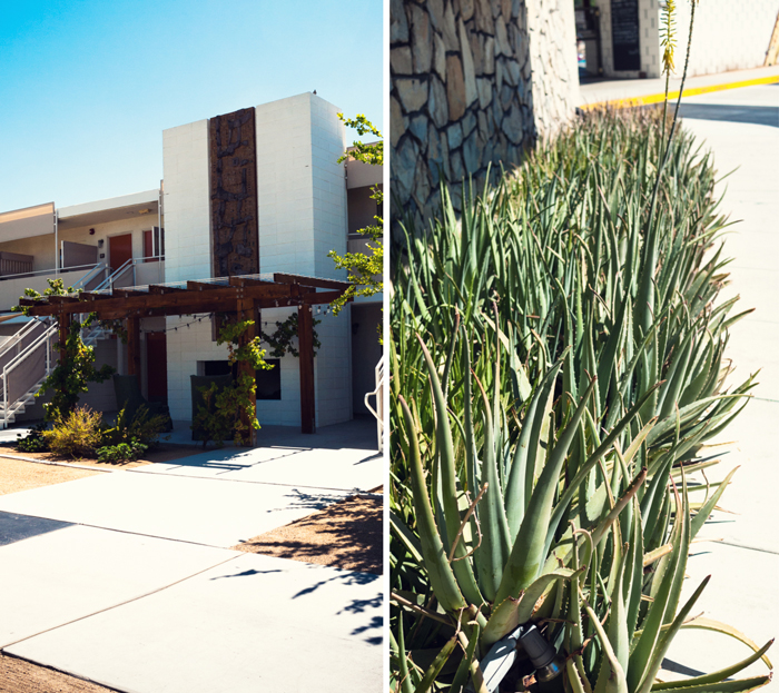 Buildings and Aloe at Ace Hotel & Swim Club