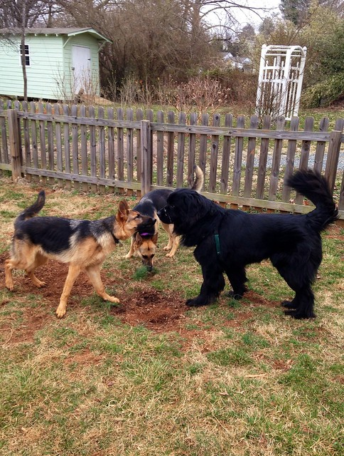 Play date with Loki