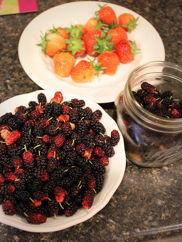 20130601. Backyard foraging - mulberries from the neighbor's tree.