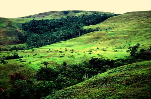 #holz von Hier, Bild Abgeholzter Urwald in Lateinamerika