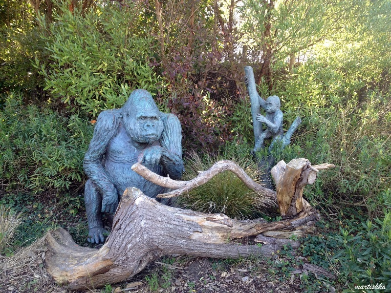 San Francisco Zoo (10)