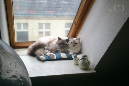 These are Tsuki and Bärchen on their first morning in their new home...