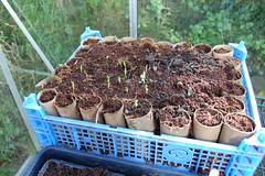 2013 06 01_gardening_0002