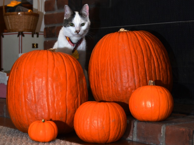 Halloween Eddy