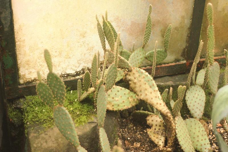 cactus estufa quente 3
