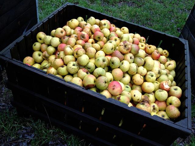 Limburgse appel- en perenstroop van Eugène Wiertz - de appelen