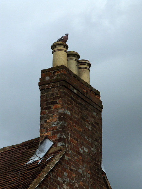 woodpigeon on chimney pots