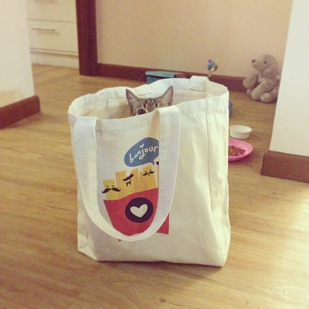 My cat in a bag